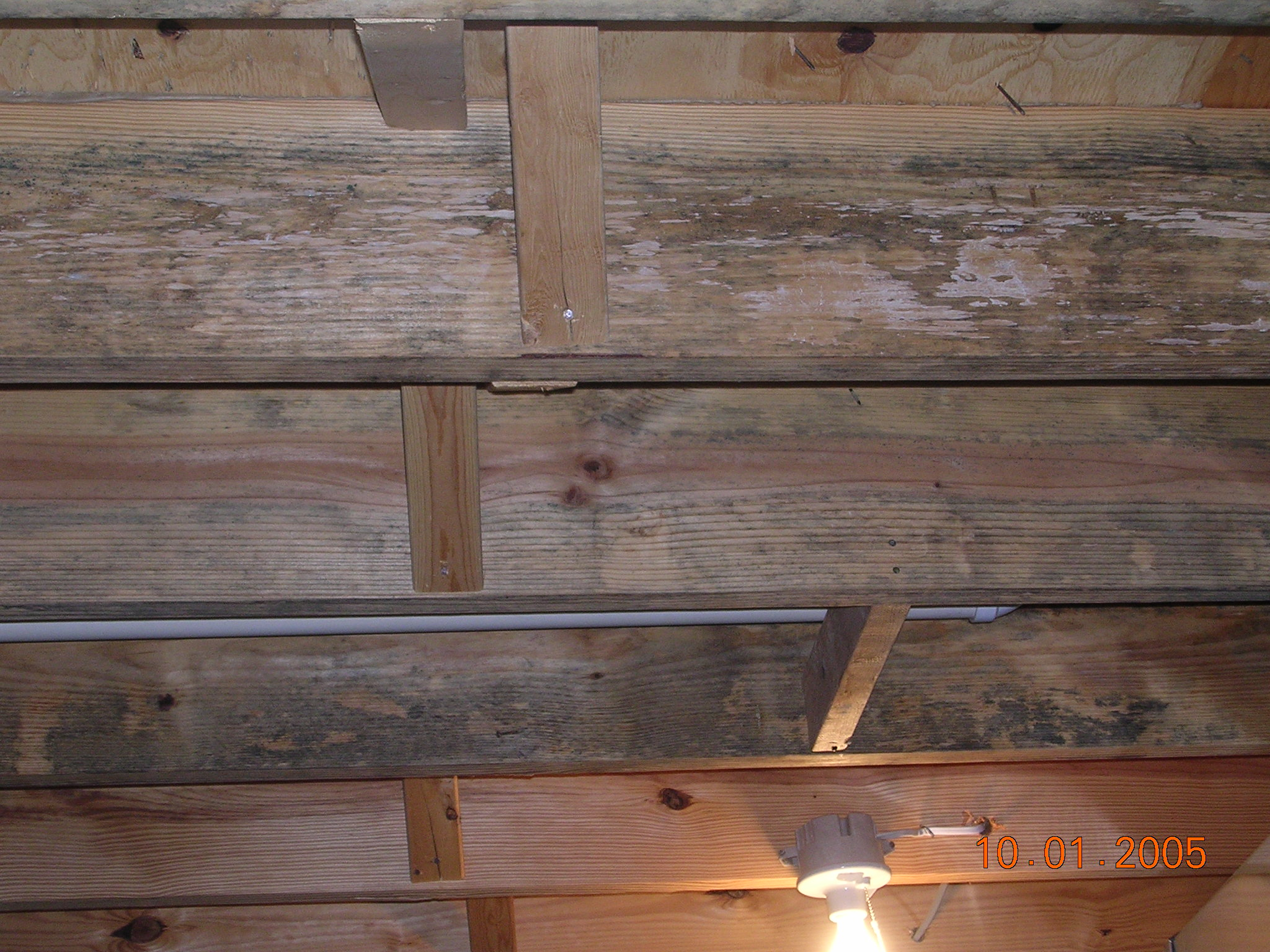 Image Result For Test For Mold In House