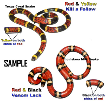 Coral snake and milk snake compared
