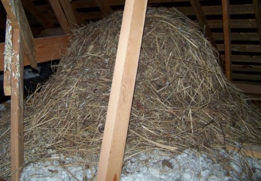 Bird nests are very flammable and they can block ventilation systems. Photo by Buck Hartley