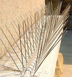Bird spikes are used to prevent birds from roosting on buildings
