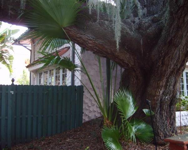Tree too close to house