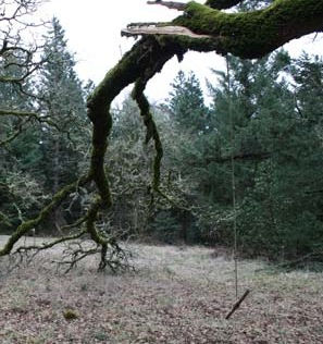 This dead tree may have looked large and sturdy enough to support a tree swing, but its brittle bark and branches make it an unsuitable and dangerous candidate.