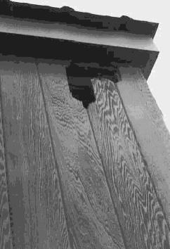 Woodpecker Damage Prevention And Inspection Internachi 174