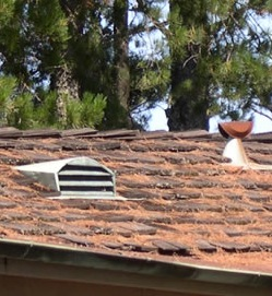 Pine needles pose a fire hazard to this roof. Hopefully the vent is screened.