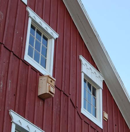 Woodpecker Damage Prevention And Inspection Internachi