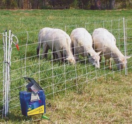 A solar-powered electric fence