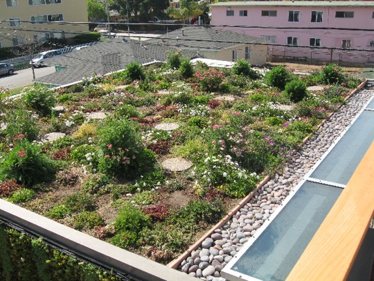 surface in contrast to a rooftop container-garden or rooftop garden in which plants are kept in inidual containers. Green roofs capture precipitation ... & Green Roof Inspection - InterNACHI memphite.com