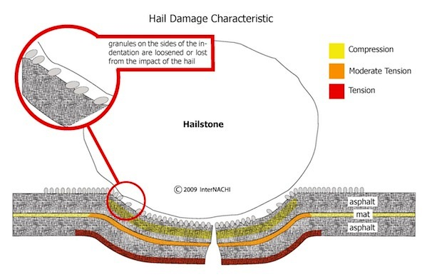 when the hailstone strikes, the shingle flexes downward  the top surface of  the shingle is in vertical compression and the bottom is in horizontal  tension