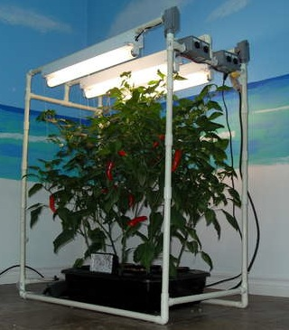 Hydroponics are used indoors to grow plants without soil
