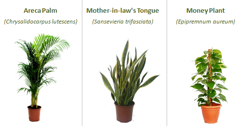 These plants are excellent enhancers of indoor air quality