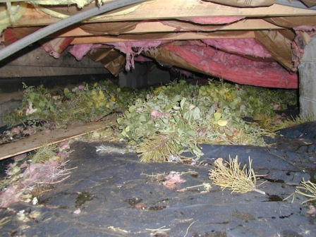 Mastering Roof Inspections Pests Internachi