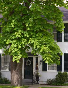A shade tree can be uesful during the summer