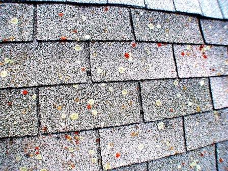 Mastering Roof Inspections Asphalt Composition Shingles Part 43 – Lichen Removal From Roof Shingles