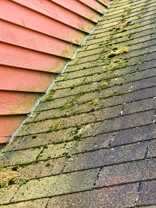 Roof How To Clean Algae And Moss Off Asphalt Shingles