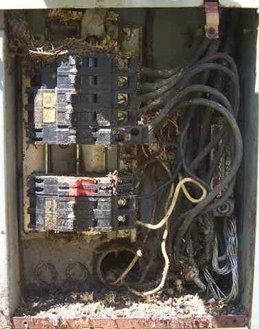 Un pauvre serpent est entré dans ce panneau de distribution et s'est fait électrocuter. Le carnage qui en résulte peut rendre les composants défectueux.